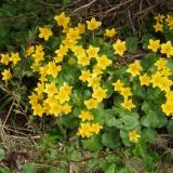 Flora-Blatouchy